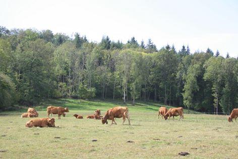 -Annonce de reprise d'une ferme d'élevage en biodynamie en Ariège- (09290 GABRE)